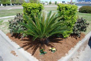 commercial lawn landscaping lafayette la